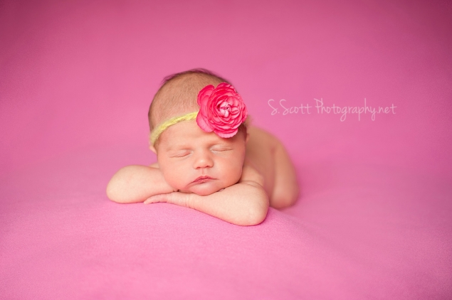 Session ellie newborn zanesville ohio newborn photographer